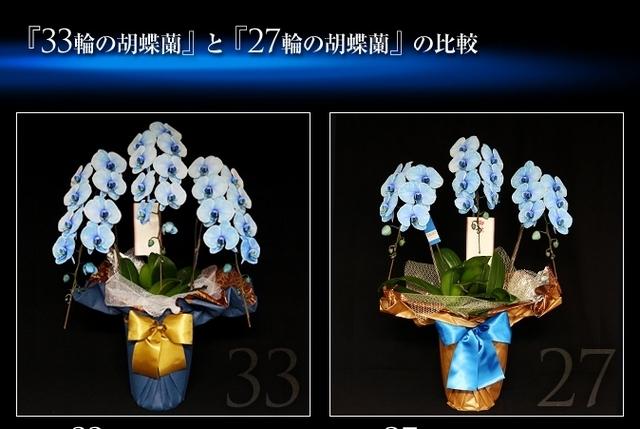胡蝶蘭 お祝 配達 青 花束 豪華