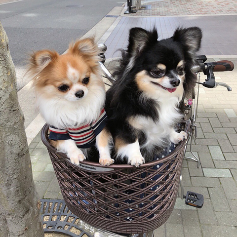 自転車かごのC&H