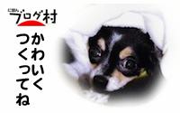 AZ-coo8.jpg