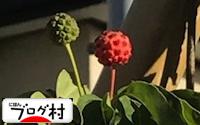 C-yamabousi_201803210846534ce.jpg