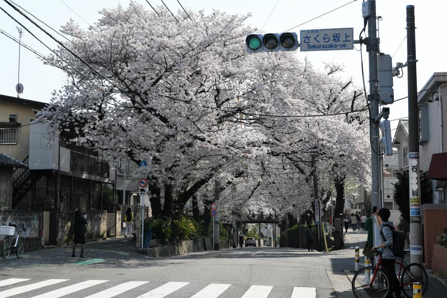 桜坂上 交差点