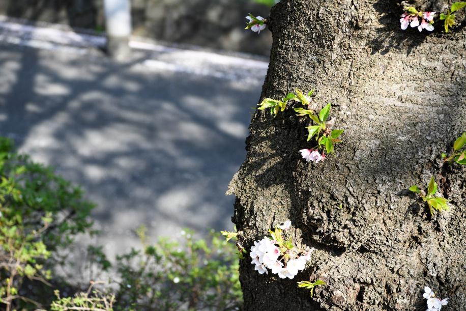 幹に咲く花