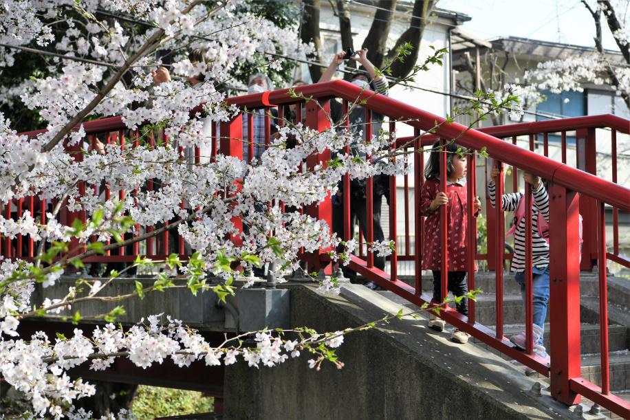 桜と遊ぼー
