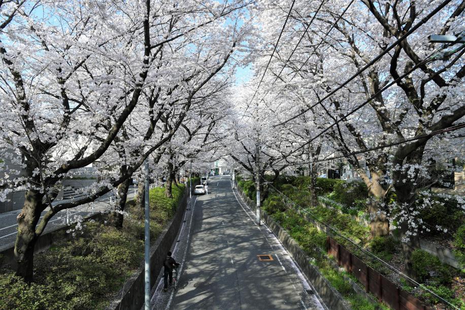 桜橋上からの眺め