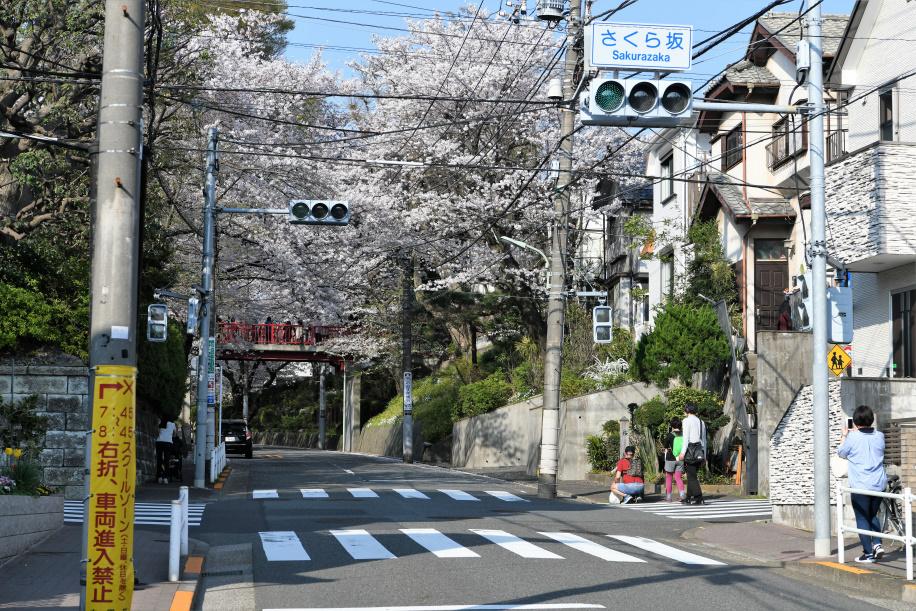 桜坂下 交差点 2