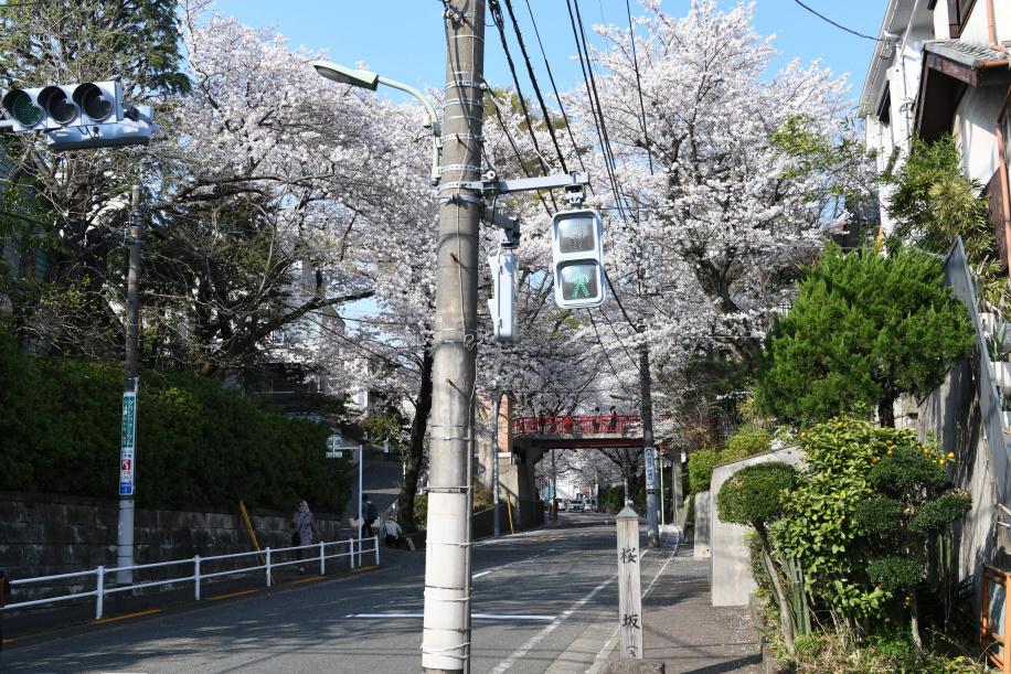 桜坂下 交差点 1