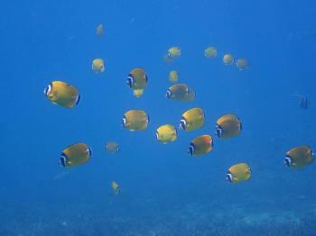 水中画像、タオ島