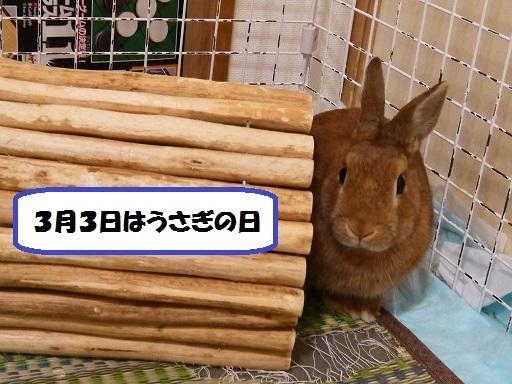 P1400263.jpg