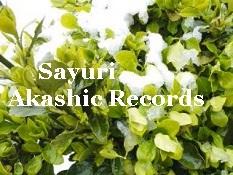 雪と茶畑 アカシックレコード リーダーさゆり