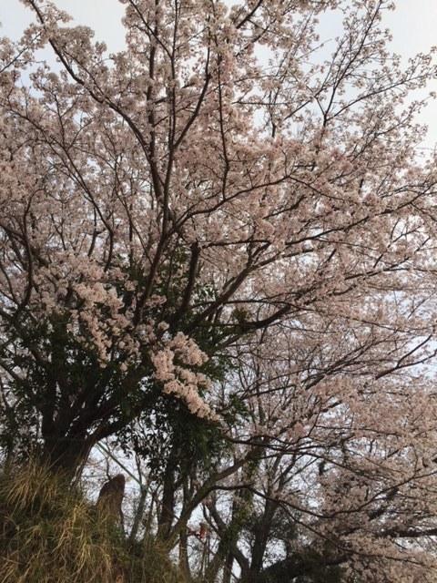 3/29    晴天ベタ凪!春の磯釣り釣行 (大塔店)