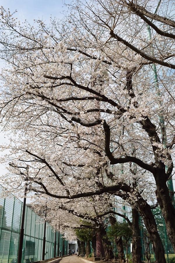 春の南麻布散策