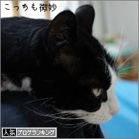 dai20180228_banner.jpg