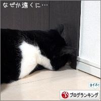 dai20180314_banner.jpg