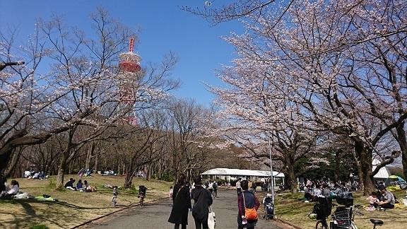 航空公園 桜 3