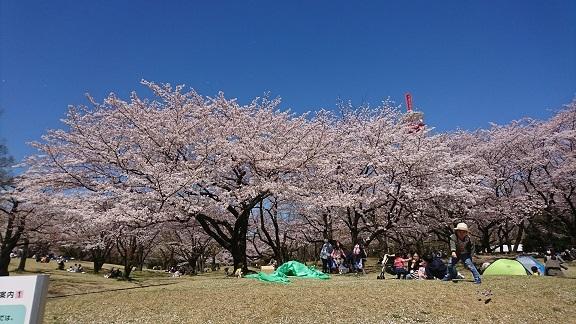 航空公園 桜 5