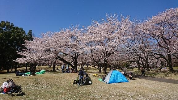 航空公園 桜 6
