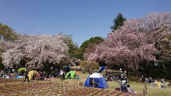 航空公園 桜 9