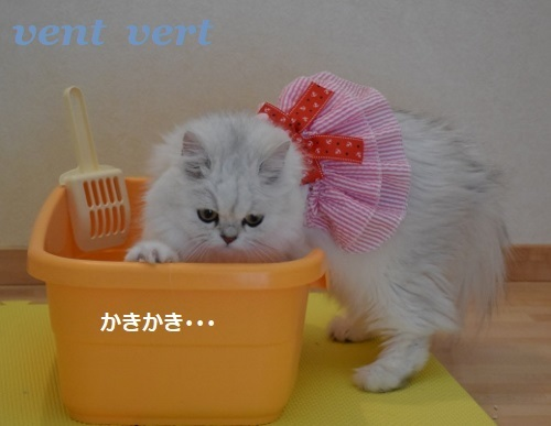 おトイレ6