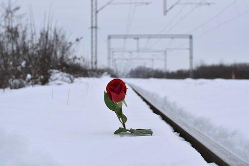 red-rose-in-snow-3183739__340.jpg