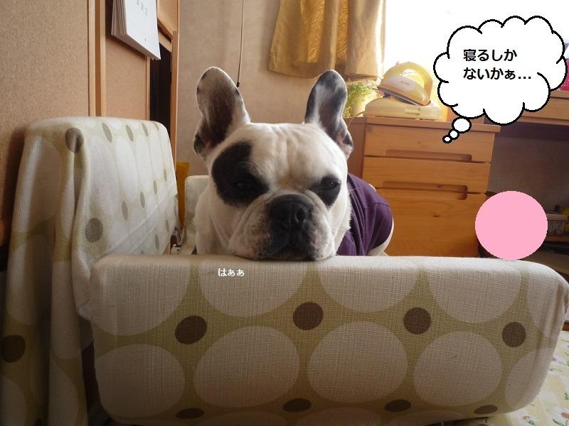 にこら201011to201108 2760