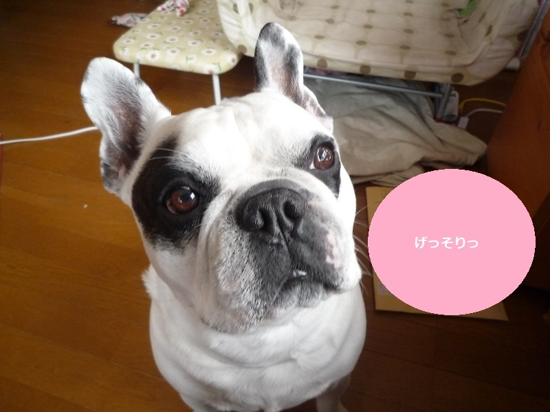 にこら201011to201108 2822