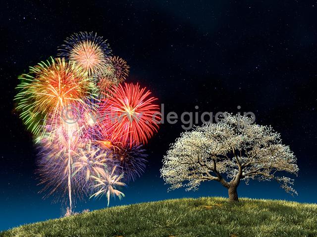 打ち上げ花火と夜桜