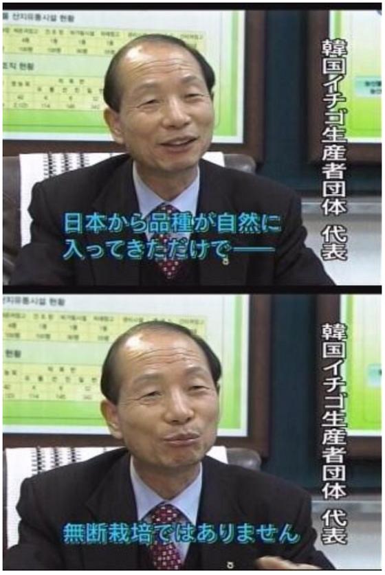 韓国イチゴ生産者団体 代表「日本から品種が自然いn入ってきただけで――無断栽培ではありません」