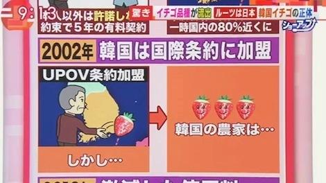 201706 日本のイチゴを盗んだ韓国!損失5年間で220億円 テレ朝「羽鳥慎一モーニングショー」より
