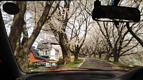 下佐波付近の堤防の桜_シャレードデトマソの車内から2018_01