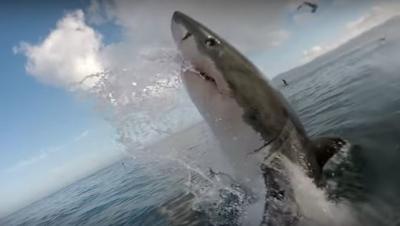 【スゴイ!】ド迫力のサメ映像!