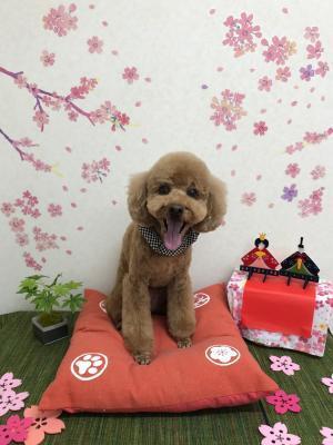 ちょび_convert_20180310214918