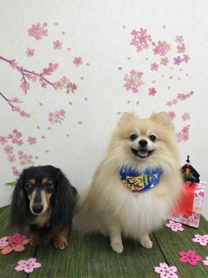 ハナな_convert_20180325220009