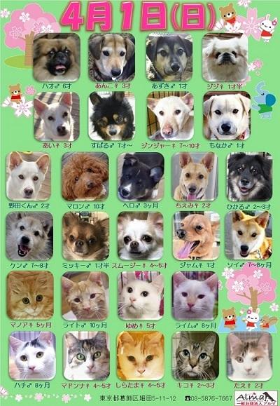 ALMA ティアハイム 2018年4月1日 参加犬猫一覧