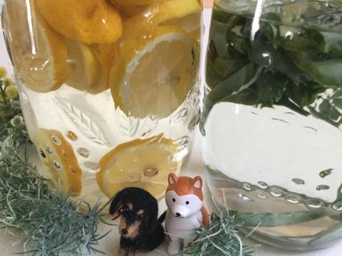 nana to hachi レモンとアロエの化粧水