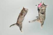 cat22.jpg
