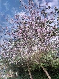 DSC_2417香港オーキッドツリー