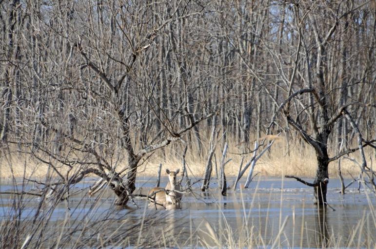 釧路湿原の増水 その2