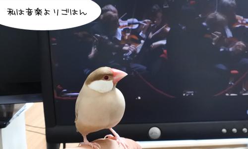 文鳥はバッハとピカソが好きらしい_5