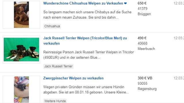 インターネット 犬 販売 ドイツ