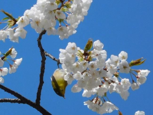 桜目白3003