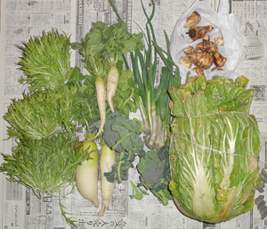 20180305野菜blog01