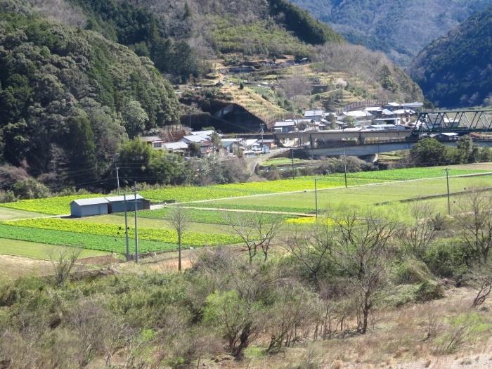 菜花畑と鉄橋