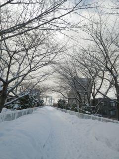 大雪のサイクリングロード