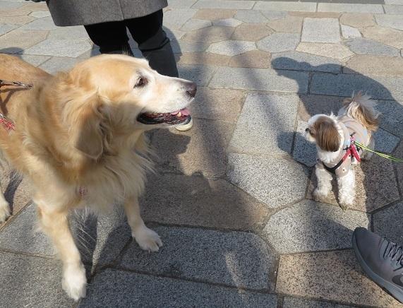 10E15 もこちゃん人好き犬見知り 0219
