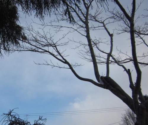 庭から見る空