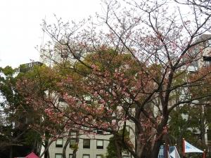 色づく横浜公園。