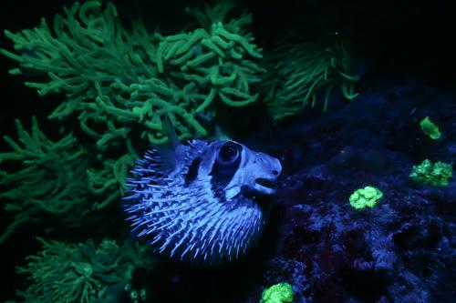 Fluorescence Diving フローダイビング⑤