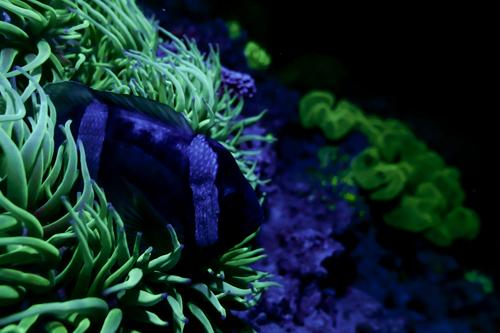 Fluorescence Diving フローダイビング⑨