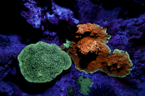 Fluorescence Diving フローダイビング⑬