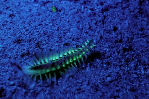 Fluorescence Diving フローダイビング⑭